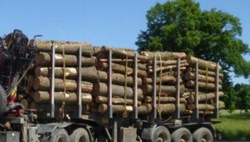 AKCE: Smrk - celý lesovůz (44m rovnaných) za 19 500 Kč